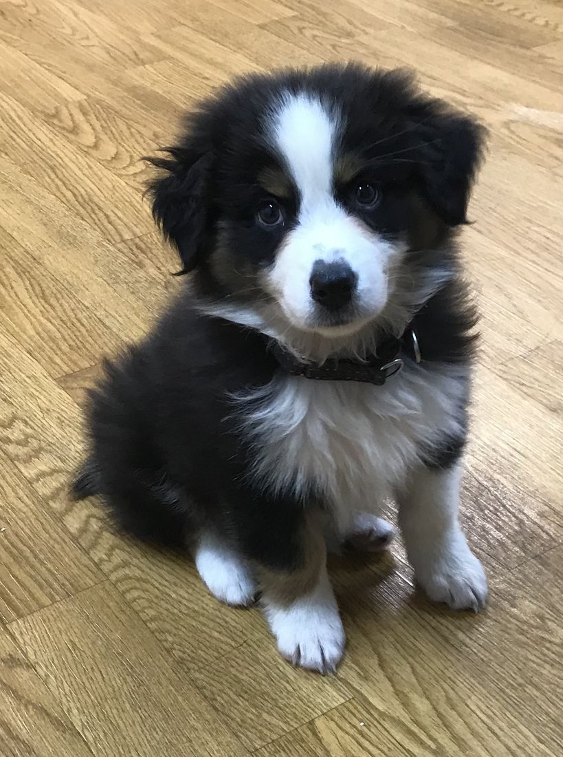 private puppy training puppy