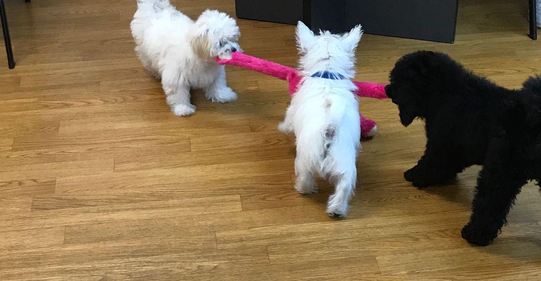 best puppy preschool program puppies playing