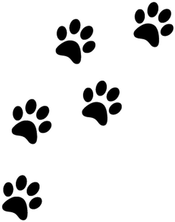 Patte Chat Png - Paw Prints Transparent Background Clipart (800x800), Png Download