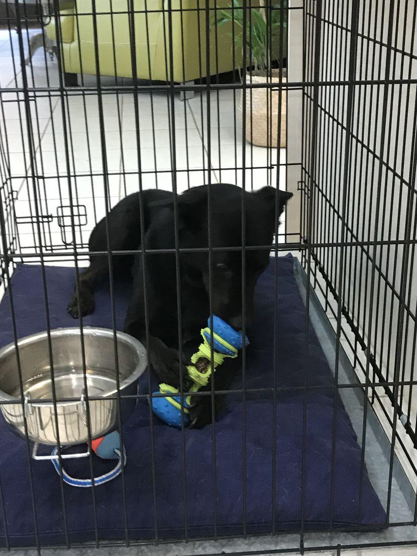 Ryda crate training dog