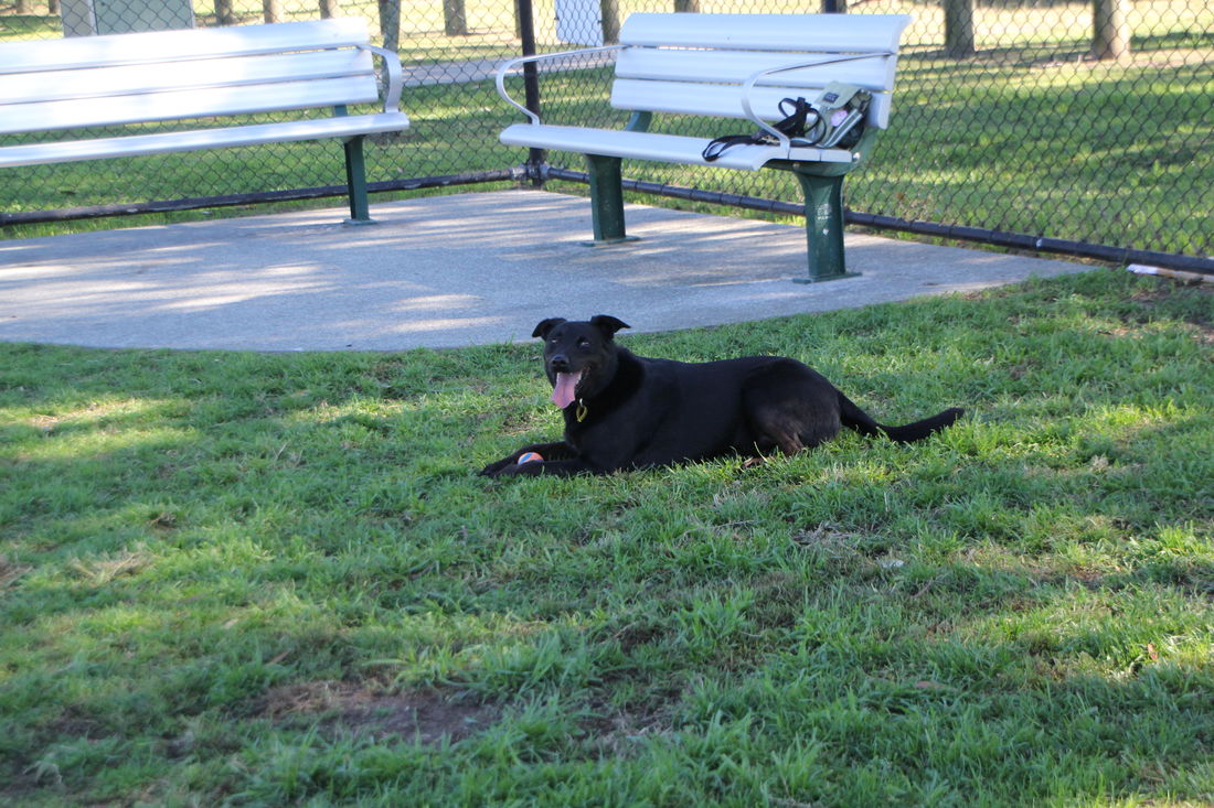 Woof And Wags Dog Training